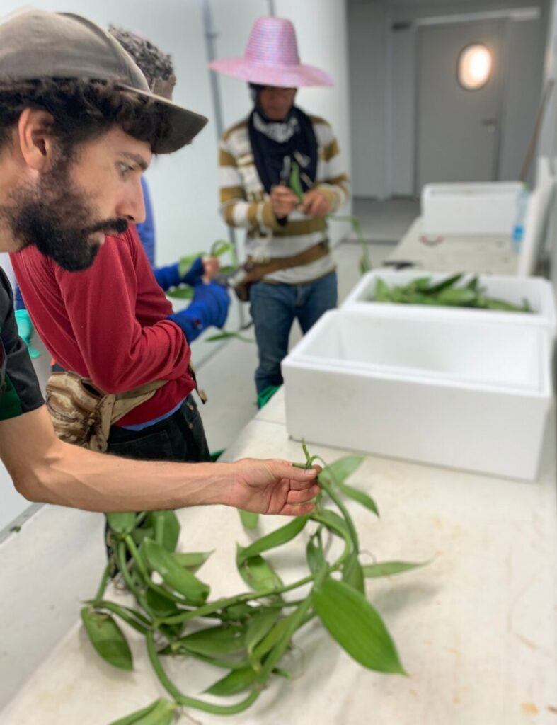 Seedling production facility in Yesod HaMaala. Vanilla Vida ships seedlings to different growing locations throughout Israel. (Vanilla Vida/Bar Cohen)